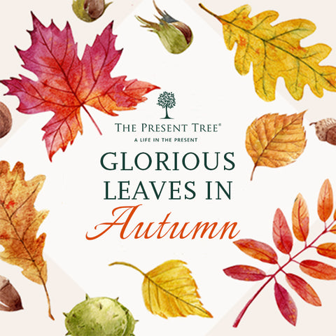 The most beautiful Autumn leaves