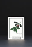 Arbutus tree gift card