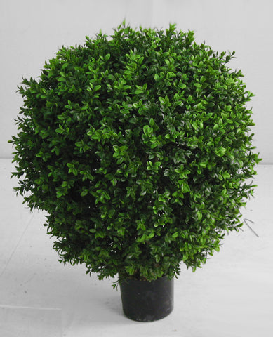 Boxwood Ball, 10-035