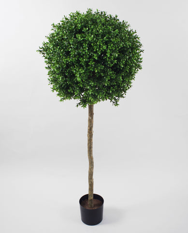 Boxwood Ball Tree, 1071-125