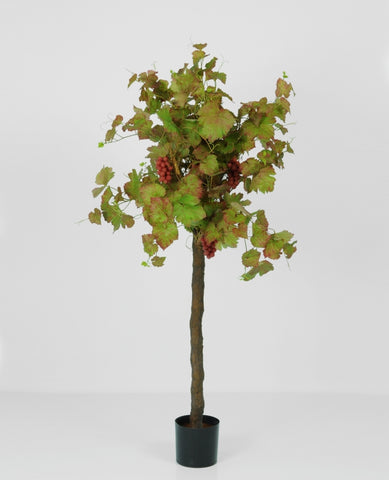 Grape Ivy, 1144-130