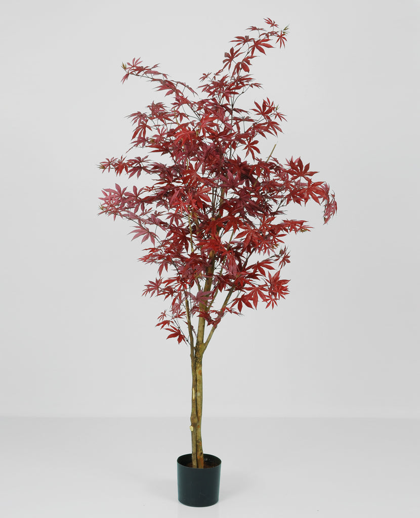 Maple Red, 1145-140