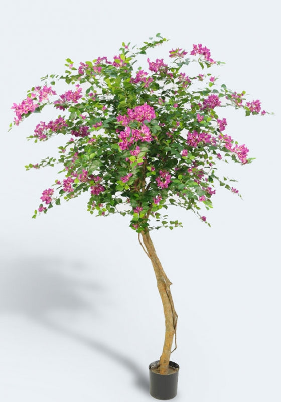 Bougainvillea Tree, 1221-140