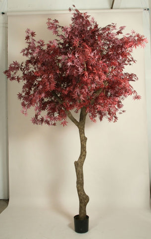 Ahorn Maple Burgundy, 1215-350