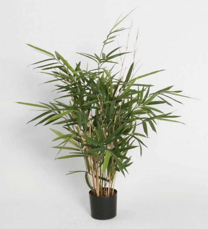 Royal Bamboo, 1254-090
