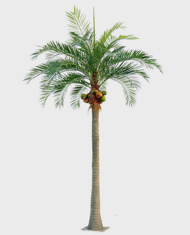 Coconaut Palm, 60-390