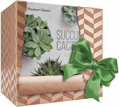 Succulent & Cactus Growing Kit