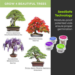 Premium Bonsai Starter Kit