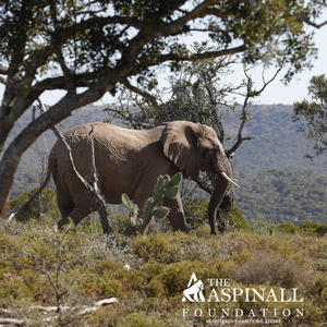 Sponsor Harry the Elephant and his herd