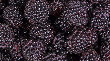 Everything You Need To Know About Anthocyanins