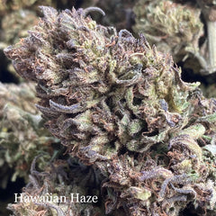 Hawaiian Haze - Outdoor - 15% CBDa - 2.1% Terpenes