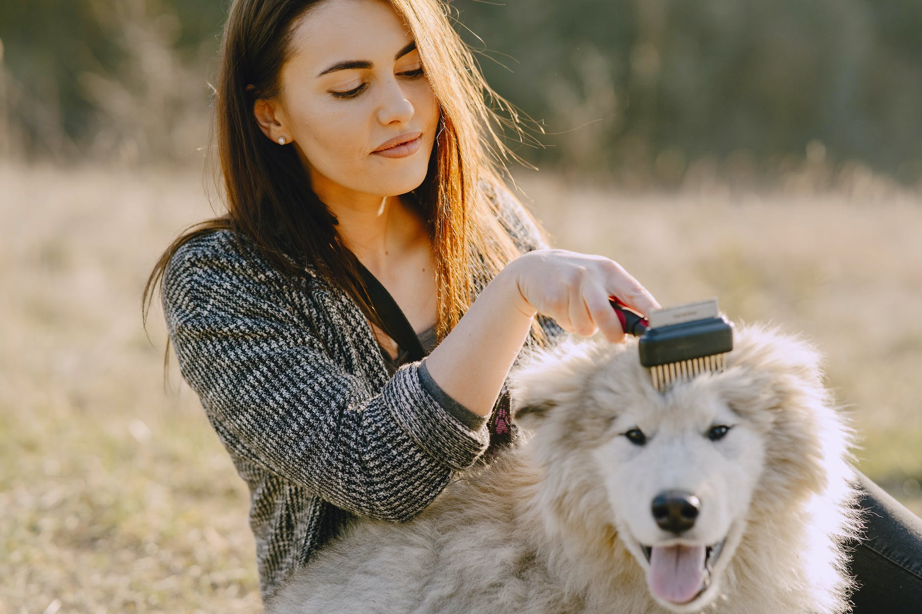 A Quick and Easy Guide to Grooming Your Dog at Home