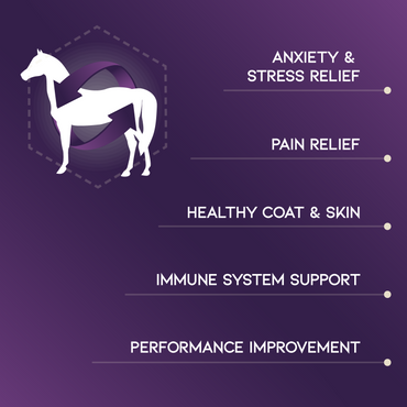 Corcel Hemp Oil Horse Formula 2000mg