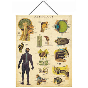 Physiology Canvas Wall Hanging