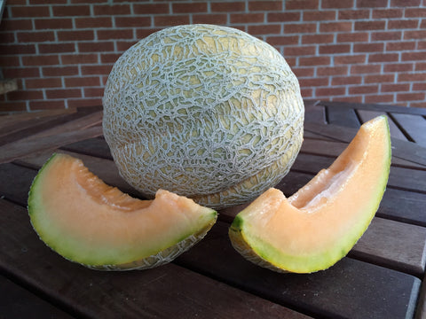 Pride of Wisconsin Melon