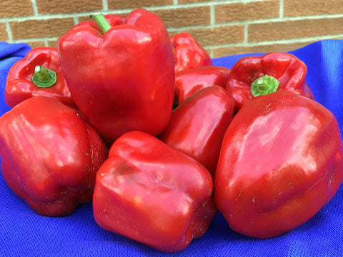 Wisconsin Lakes Sweet Bell Pepper