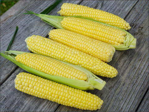 Top Hat Sweet Corn