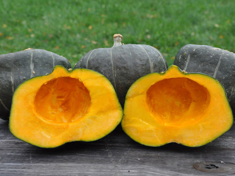 Burgess Buttercup Winter Squash