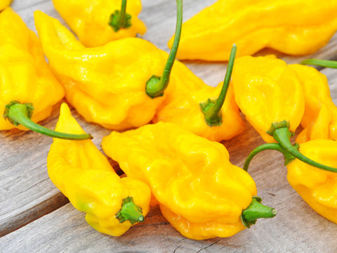 Fatalii Hot Pepper