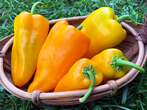Gatherer's Gold Sweet Pepper