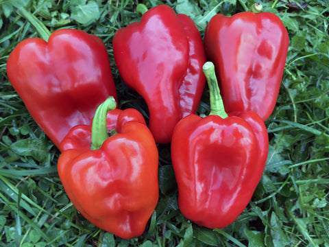 Margaret's Sweet Pepper