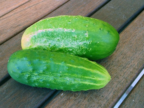 Early Fortune Cucumber