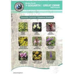 Poster image of Great Orme Wild Flowers