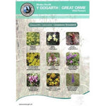 Great Orme Wild Flower ID Chart