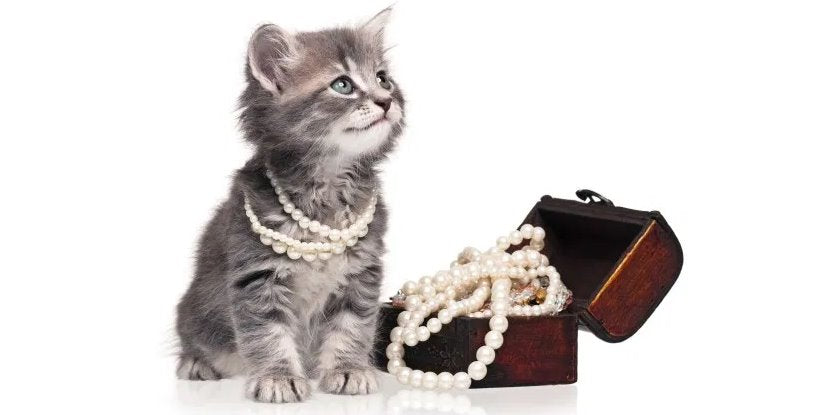 TOP 5 des Bijoux en Forme de Chat