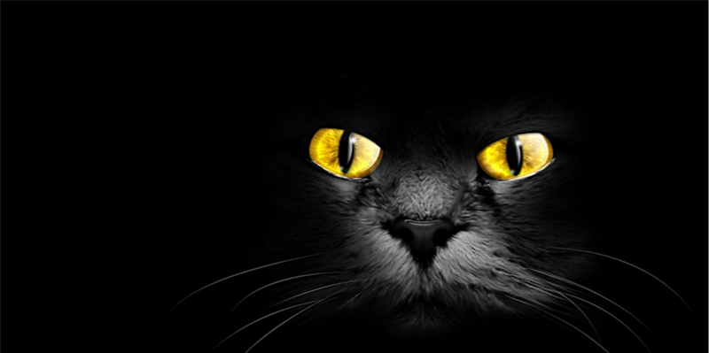 Halloween Fiction: The Black Cat on Bleecher Street