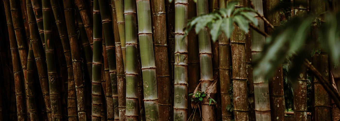 Bamboo - Sustainable Material Guide - The Comarché