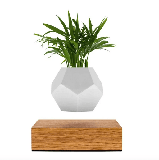 Levitating Air Plant - [Homistic]