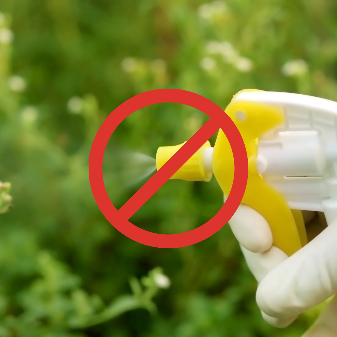 deet and insecticide free