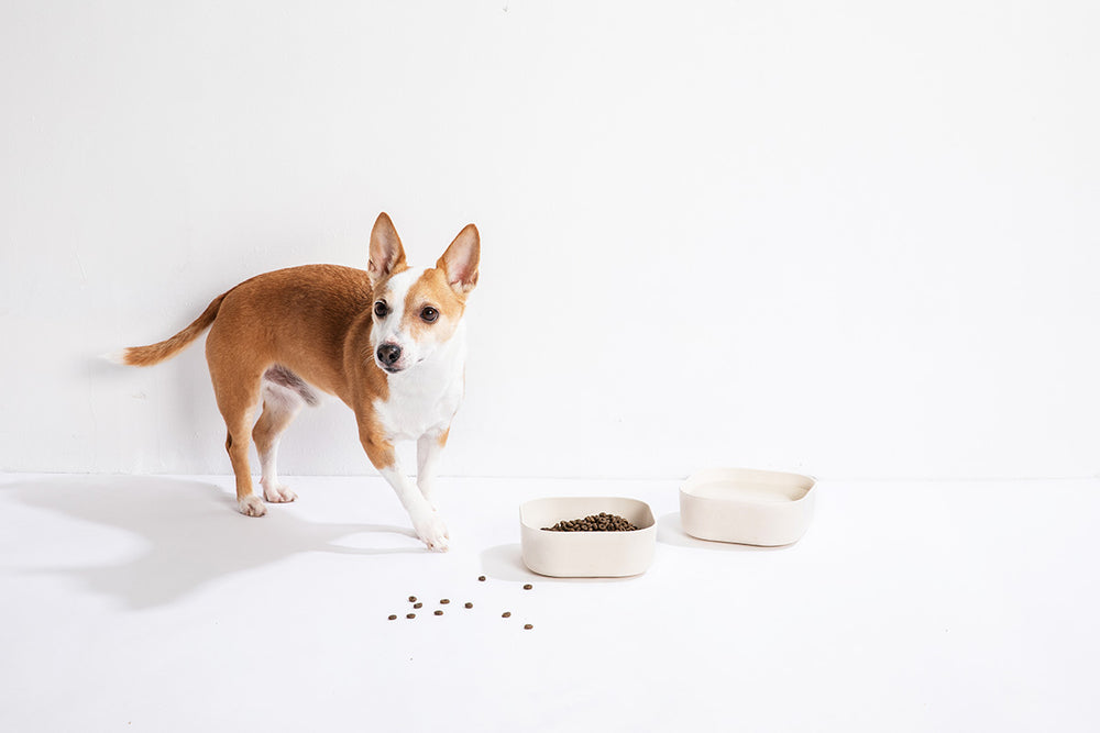 Venandi Design Pet Bowl - Natural White