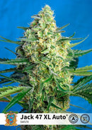 Sweet Seeds Jack 47 XL Auto®