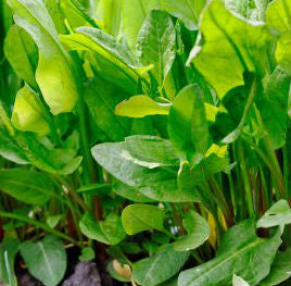 5 spring vegetables you should be eating sorrel