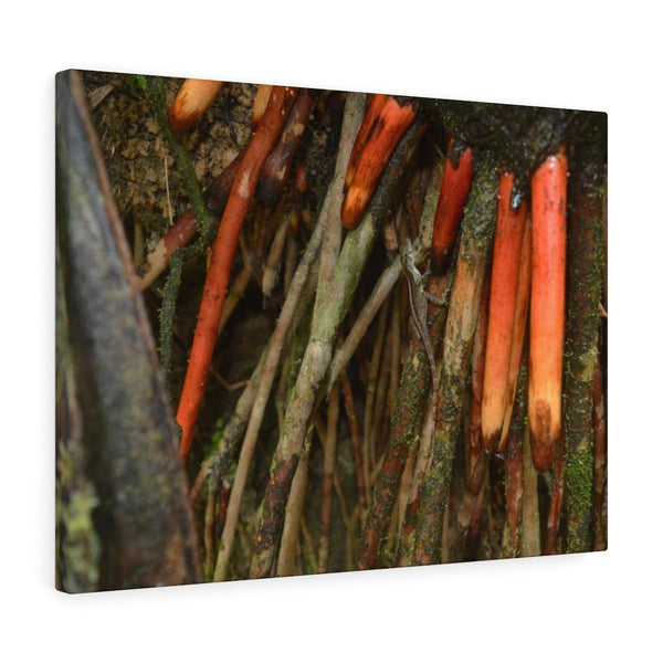 14km Tradewinds Trail explorations - El Yunque rainforest - Canvas Gallery Wraps - myAwesomeHome.store