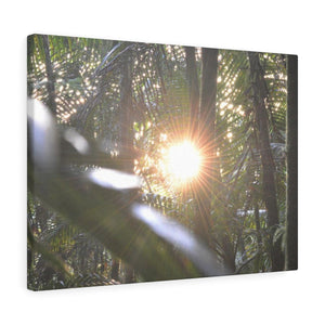 14km Tradewinds Trail explorations - El Yunque rainforest - Canvas Gallery Wraps (bundle) - myAwesomeHome.store