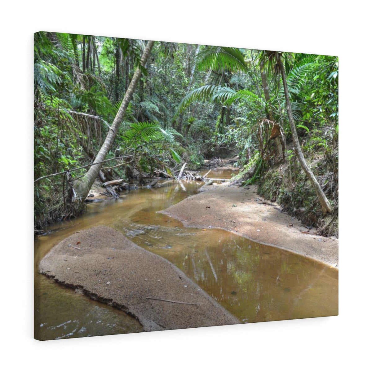 Holy Spirit river deep forest explorations  - El Yunque rainforest - Canvas Gallery Wraps
