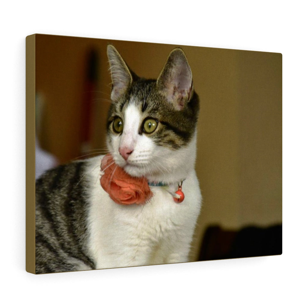 Canvas Gallery Wraps - US Print - The home cat Dante - looking for a new advenmture...