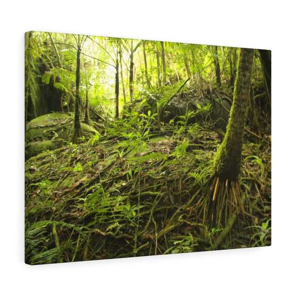 Holy Spirit river explorations near Tradewinds trail  - El Yunque rainforest - Canvas Gallery Wraps