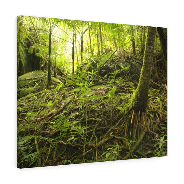 Holy Spirit river explorations near Tradewinds trail  - El Yunque rainforest - Canvas Gallery Wraps (bundle)