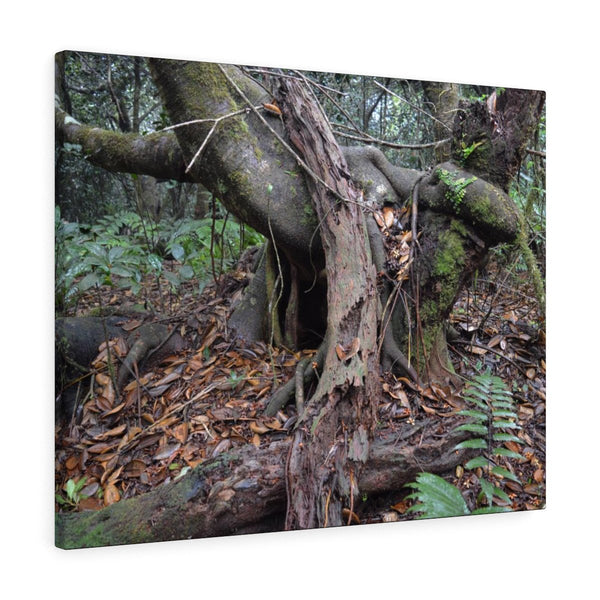 Old Pal in the 14km Tradewinds Trail explorations - El Yunque rainforest - Canvas Gallery Wraps (bundle) - SingleClick.store