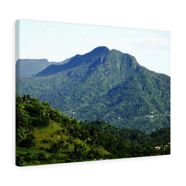 View of the forest with some hurricane damage visible - El Yunque rainforest - Canvas Gallery Wraps - SingleClick.store