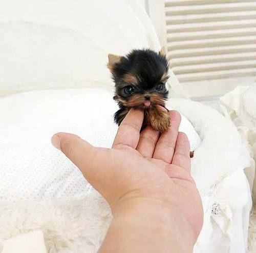 Teeny Tiny Puppers that Will Make You Smile