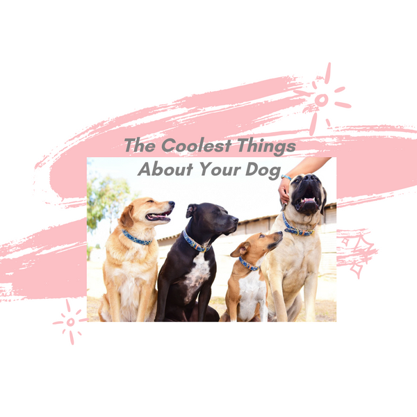 The Coolest Things About Your Dog🐕