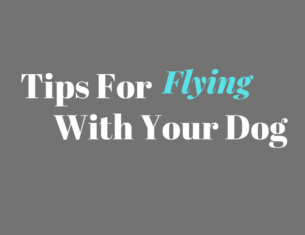 7 Tips For Flying With Your Dog