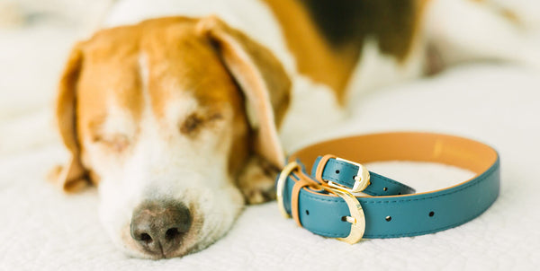 FriendshipCollar Reps: Brittany & Copper