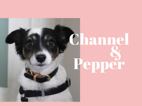 Chanel & Pepper