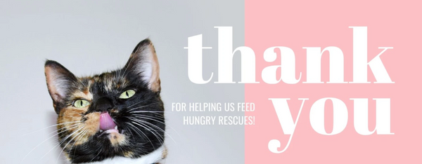 With your help, we fed these cute cats!